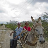 wagon-donkey-farmers-rural-area-pack-animal-horse-like-mammal-947362-pxhere.com.jpg